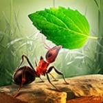 小小蚁群 v3.4