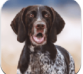 狂犬模拟器 v1.1.0